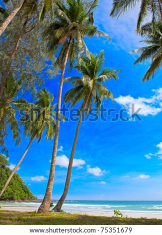 Tropical plants on beautiful beach. Luxury exotic vacations. - stock photo