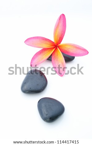 Tropical Plumeria Frangipani with spa stone for spa and wellness concept with isolated white background focus pointed at the Tropical Plumeria using rule of third (RO3) and shallow DOF - stock photo