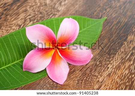 Tropical Plumeria with Green Leaf on texture wooden table for spa and wellness concept - stock photo