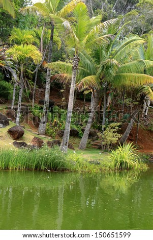 Tropical pond with palm trees growing close to the water's edge.