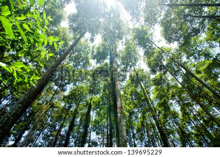 Tropical primary forest in CucPhuong, ninhbinh, Vietnam - stock photo