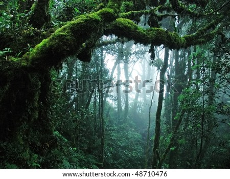 tropical rain forest - stock photo