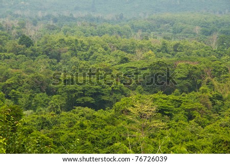 Tropical rain forest in Thailand. - stock photo