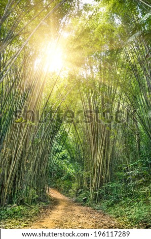 Tropical rain forest in the national park of Khao Sok in the heart of Thailand - Sunbeams lightening a secret passage in the subtropical rainforest like in a fairy tale - stock photo