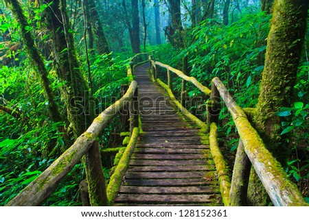 tropical rain forest path asia thailand - stock photo