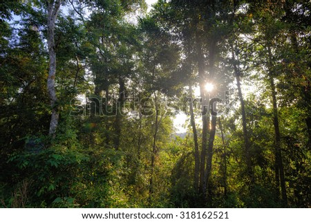 Tropical rain forest with sun ray - stock photo