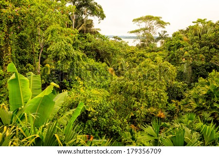 Tropical Rainforest Aerial Landscape Of National Park Yasuni, South America  - stock photo