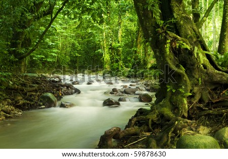 Tropical rainforest and river at Selangor State, Malaysia, Asia. - stock photo