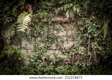 Tropical rainforest background with roots and leaves - stock photo