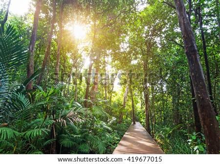 Tropical rainforest in asia with wood walk way, Krabi, Thailand. - stock photo
