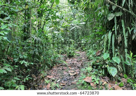 tropical rainforest in Guadeloupe