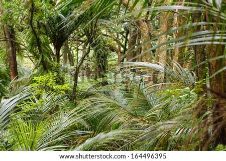 tropical rainforest in Waitakere Ranges, New Zealand - stock photo