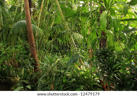 Tropical rainforest jungle - stock photo