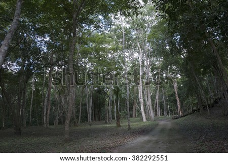 Tropical Rainforest Landscape, Guatemala - stock photo