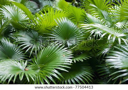 tropical rainforest palm background - stock photo