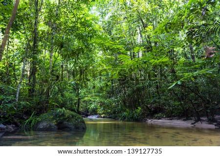 Tropical rainforest river - stock photo