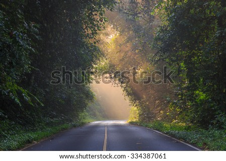 Tropical RainForest, road at Khaoyai National Park (The World Heritage of nature) Thailand