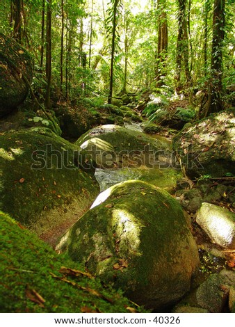 Tropical rainforest scene - stock photo