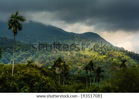 tropical rainforest Thailand - stock photo