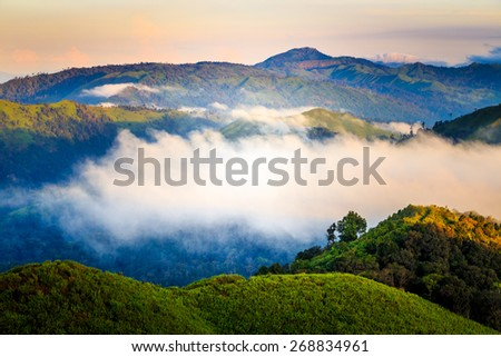 Tropical rainforest,Thong Pha Phum National Park, Kanchanaburi, Thailand  - stock photo