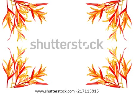 Tropical red and orange Heliconia flower, Heliconia psittacorum Rubra, isolated on a white background - stock photo