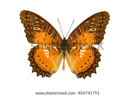 Tropical Red Lacewing butterfly (Cethosia biblis) isolated on white background