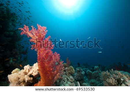 Tropical reef and fish in the Red Sea.