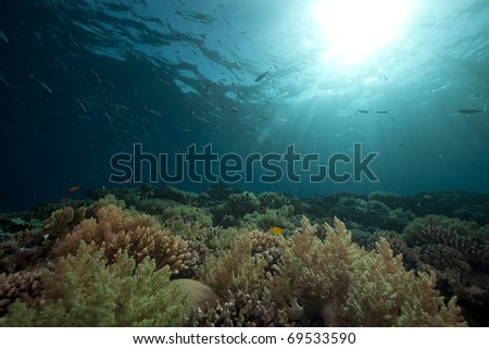 Tropical reef and fish in the Red Sea. - stock photo