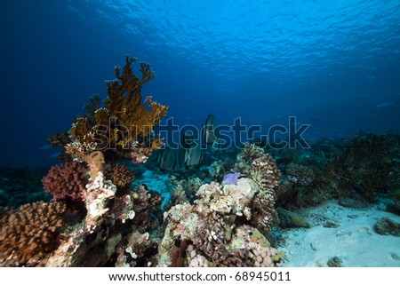 Tropical reef and marine life in the Red Sea.