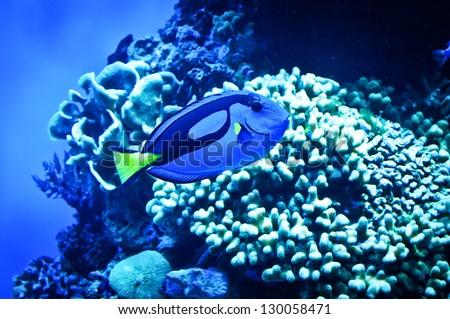 Tropical Reef Fish - stock photo