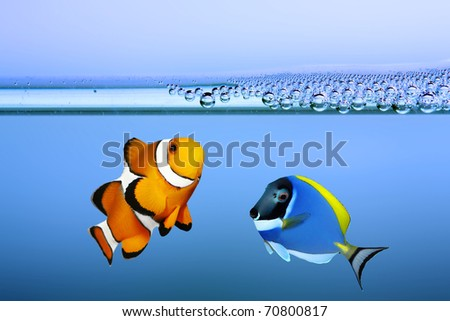 Tropical reef fish - Clownfish and Surgeonfish - stock photo