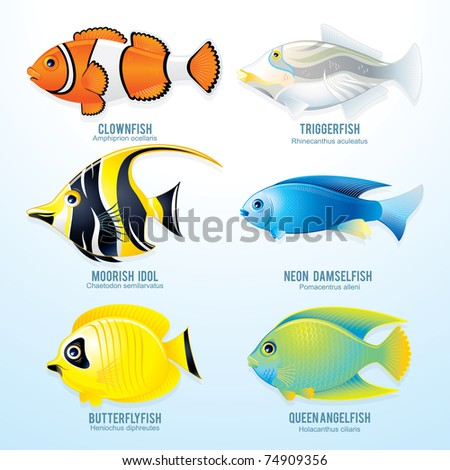 Tropical reef fish collection - detailed isolated illustrations - stock photo