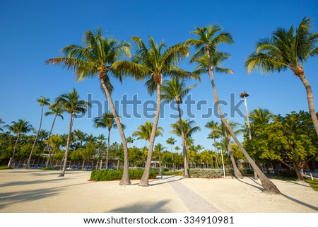 Tropical resort with coconut palms on sandy beach, Key West, Florida, USA - stock photo