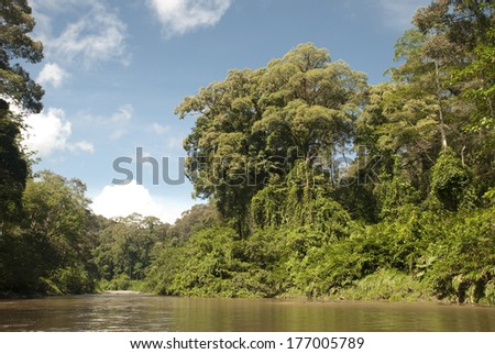 Tropical river and forest