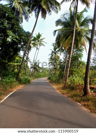 tropical road with coconut trees - stock photo