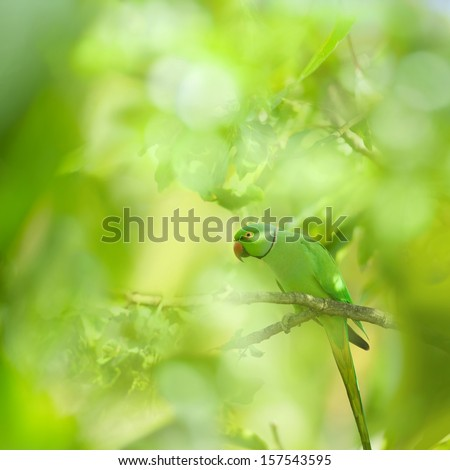 Tropical Rose-ringed Parakeet in the Forest - stock photo