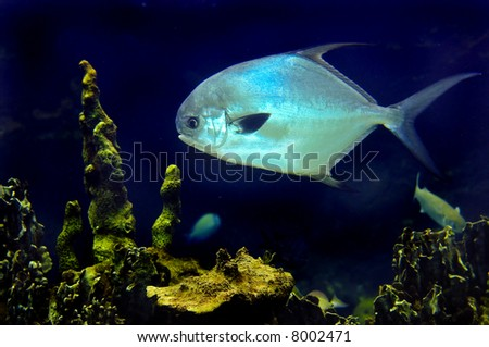 tropical saltwater fish