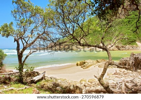 Tropical sand beach behind trees. Shot on the Otter trail in the Tsitsikamma National Park, Garden Route area, Western Cape, South Africa.  - stock photo