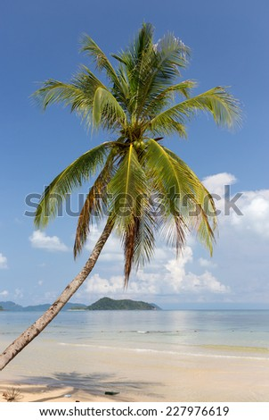 Tropical sand beach with palm tree. Koh Mak, Thailand