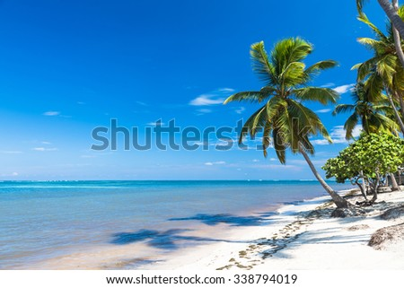 tropical sand beach with palm trees, Dominican Republic - stock photo