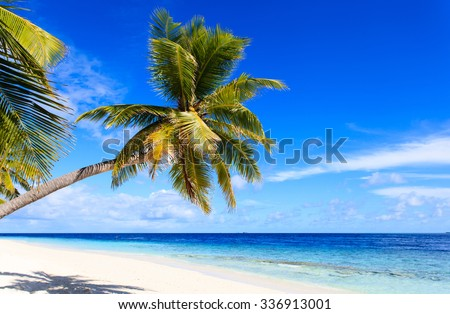 tropical sand beach with palm trees, vacation concept - stock photo
