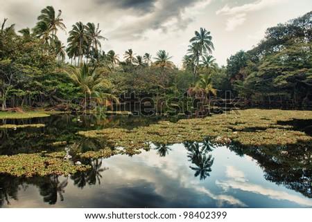 tropical scenery reflecting in water in Hawaii, Big Island - stock photo