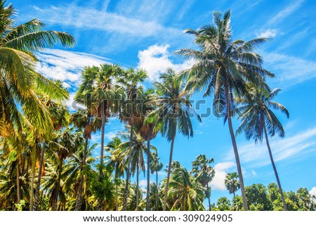 Tropical sea and blue sky in Koh Samui, Thailand - stock photo