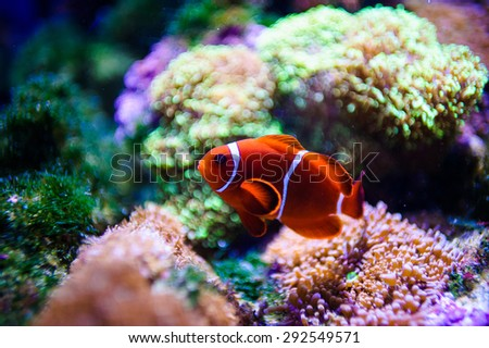 tropical sea fish - stock photo
