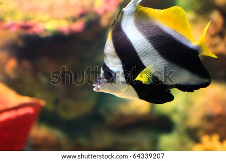 tropical sea fish in aquarium - stock photo