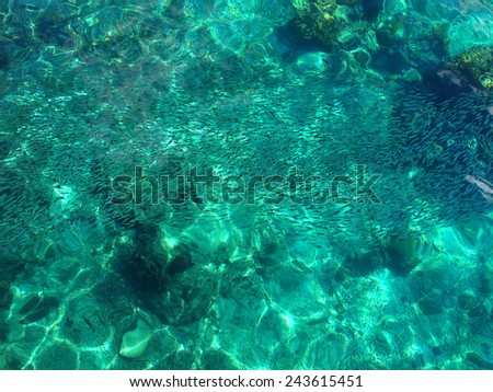Tropical sea surface