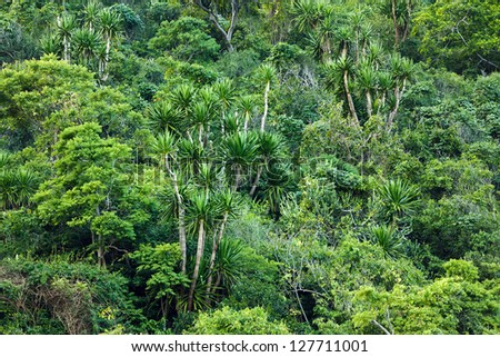Tropical shore forest in Sam Roi Yot national park, Thailand - stock photo