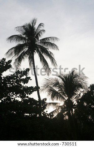 Tropical Silhouette
