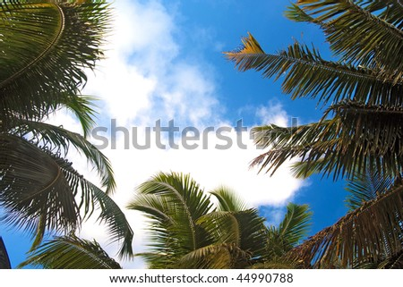 Tropical sky through the palm tree leaves. Andaman Islands. - stock photo