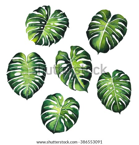 tropical Split Leaves plant botany watercolor painting pattern on white background illustration - stock photo